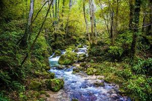 Bach im Wald foto