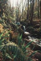 Ein Fluss fließt durch den Wald foto