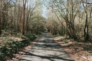 unendliche Straße durch den Wald foto
