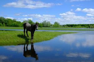 Pferde trinken auf dem Wasserplatz foto