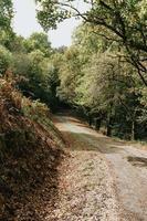 Weg mitten im Wald foto