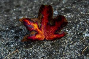 die Farben des Herbstes eins foto