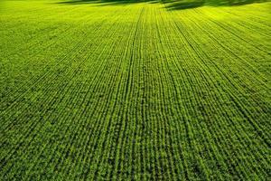 Agrarsymmetrien Null foto