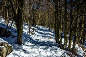 schneebedeckter Weg im Wald foto
