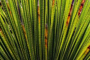bedeckt von grünem Leben foto