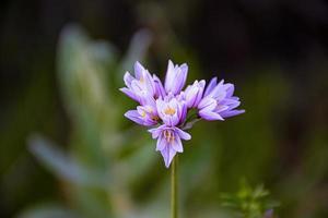 natürlicher Strauß wilder lila Blüten foto