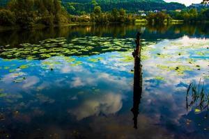 Wasser und Seerosenblätter foto