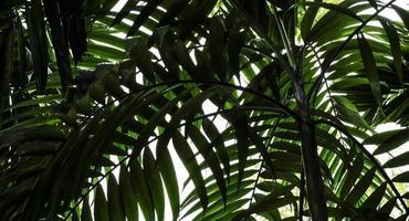 Palmblätter im tropischen Hintergrund des Gartens foto