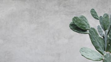 Kaktus auf Zementhintergrund minimaler Sommer foto