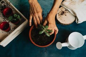 ein Paar Hände Gartenarbeit mit einer wachsenden Pflanze und Kopierraum foto