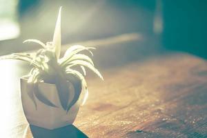 kleiner Kaktus auf dem Holztisch im Garten mit warmem Sommersonnenlicht foto