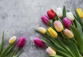 Frühlingstulpen auf einem konkreten Hintergrund foto