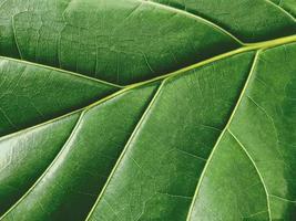 Makro grünes Blatt Textur Hintergrund Natur Blätter foto