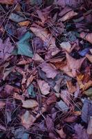 mehrfarbige trockene Blätter am Boden foto