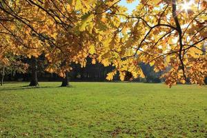 Sonne in Zweigen mit goldenen Blätternf foto