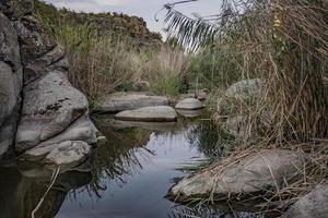 ruhiger Teich mit Steinen und Schilf in einem Naturpark foto