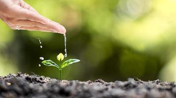Handbewässerung von Pflanzen, die auf hochwertigem Boden wachsen foto