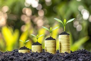 Bäume wachsen mit Geld und fruchtbarem Boden als Finanz- und Anlageidee foto