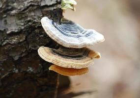 wilde junge Pilze wachsen auf Baumstamm foto