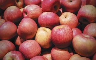 roter Apfel im Korb foto