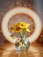 gelbe Gänseblümchen in einer Glasvase foto