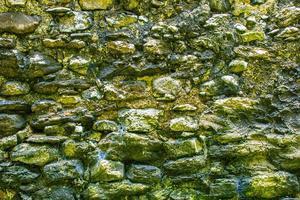 moosbedeckte Wand foto