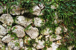 Mauerefeu und Steine foto
