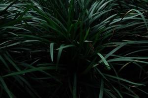 tropische grüne pflanze foto