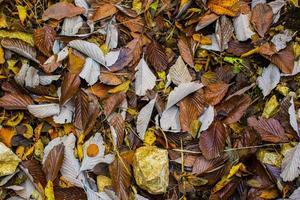 fallen Blätter auf den Boden foto