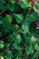 grüne Pflanzenblätter im Frühjahr foto