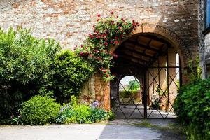 Blumen auf alter Steinmauer foto