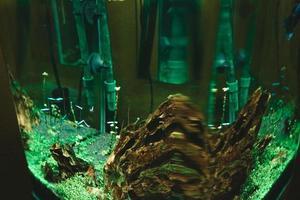 exotische Fische im Sammleraquarium foto