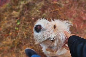 Mann, der Hund streichelt. foto