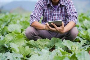 Asiatischer Bauer, der ein digitales Tablet verwendet und junge Setzlinge in seiner Farm im Gemüsegarten überprüft foto
