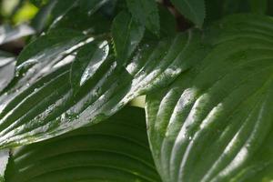 wilde Vegetation grüne Blätter im Wald foto