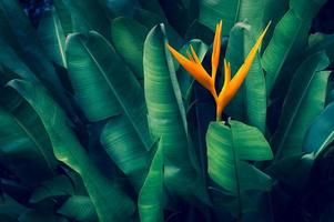 tropische Blätter bunte Blume auf dunklem tropischem Laub Natur Hintergrund dunkelgrünes Laub Natur foto