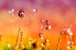 tröpfchen gras hintergrund orange lila foto