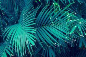 Blätter abstrakte Palmen tropische Blätter bunte Blume auf dunklem tropischem Laub Natur Hintergrund dunkelblaues Laub Natur foto