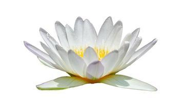 weißer Lotus in einem weißen Hintergrundisolat foto