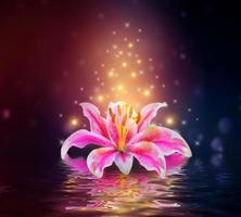 rosa Lilien blühen auf Wasserreflexion foto