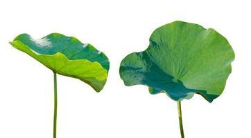 Lotusblatt isolieren 2 Sammlung von weißem Hintergrund foto
