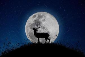 der Hirsch steht auf dem Berg ein großer Mondhintergrund in der Nacht, dass die Sterne voller Himmel sind foto