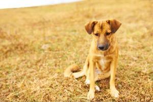 trauriger brauner Welpe hing seine Ohren. foto