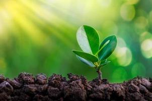Weltumwelttag, der Sämlinge junge Pflanze im Morgenlicht auf Naturhintergrund pflanzt foto