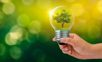 der Wald und die Bäume sind im Licht. Konzepte des Umweltschutzes und der globalen Erwärmung, die in der Glühbirne über trockenem Boden wachsen, um das Konzept der Erde zu retten foto