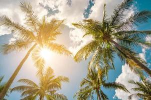 Kokospalmen und Sonne mit Wolken über dem Himmel. Sommer Konzept. foto