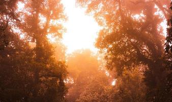 asiatischer tropischer Regenwald. Dschungel alter grüner Baum im Nationalpark Doi Inthanon, Thailand. foto