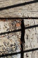 Nahaufnahme Holz Textur Hintergrund foto