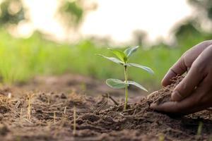 Bäume und menschliche Hände, die Bäume im Bodenkonzept der Wiederaufforstung und des Umweltschutzes pflanzen. foto
