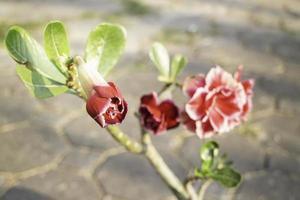 minimaler Blumengarten zu Hause foto